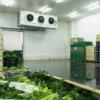 Холодильная камера для хранения 10 тонн зелени