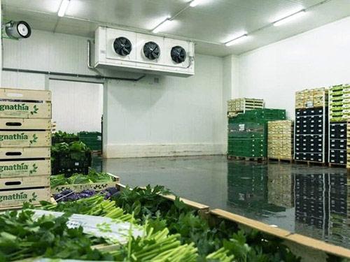 Холодильная камера для хранения 25 тонн зелени