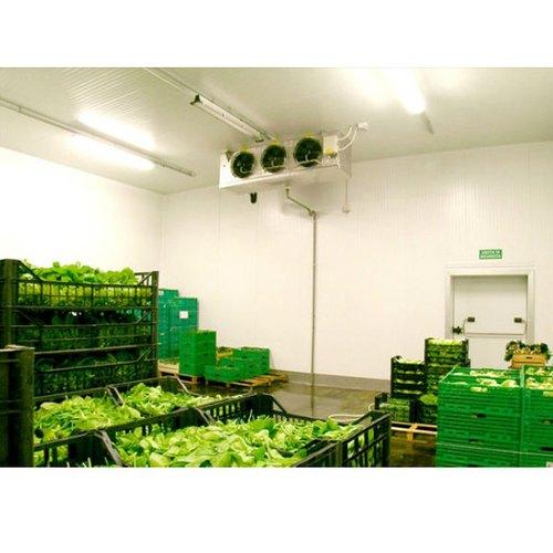 Холодильная камера для хранения 5 тонн зелени